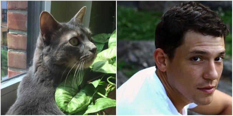 Hamilton-Cats