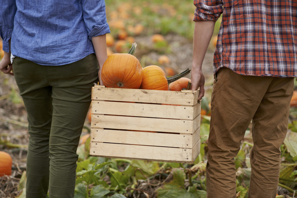 It's pumpkin picking season